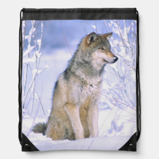 Timber Wolf sitting in the Snow, Canis lupus, Backpack