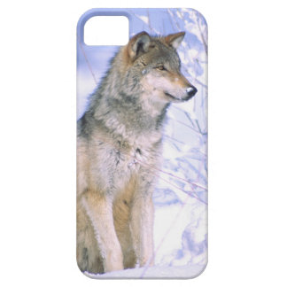 Timber Wolf sitting in the Snow, Canis lupus, iPhone 5 Case