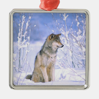 Timber Wolf sitting in the Snow, Canis lupus, Christmas Ornament