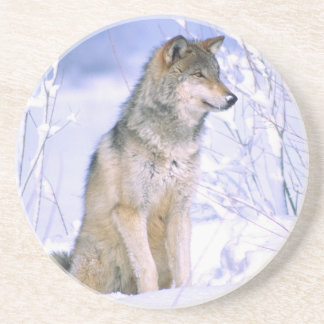 Timber Wolf sitting in the Snow, Canis lupus, Drink Coasters
