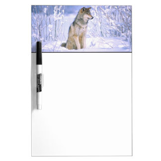 Timber Wolf sitting in the Snow, Canis lupus, Dry Erase Board