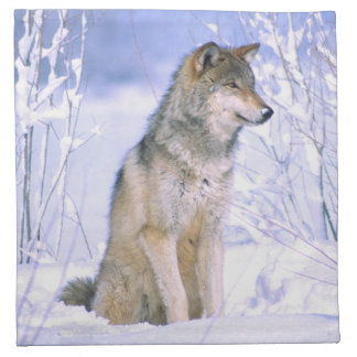 Timber Wolf sitting in the Snow, Canis lupus, Napkin