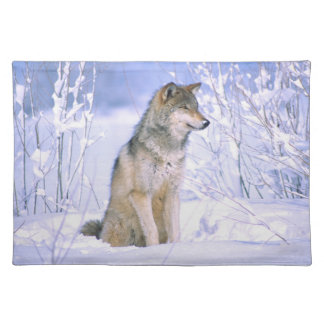 Timber Wolf sitting in the Snow, Canis lupus, Placemat