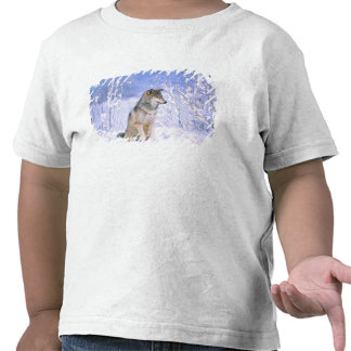 Timber Wolf sitting in the Snow, Canis lupus, Tee Shirt