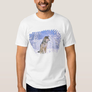 Timber Wolf sitting in the Snow, Canis lupus, Tshirt