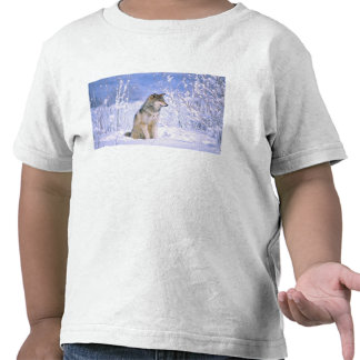 Timber Wolf sitting in the Snow Canis lupus Tee Shirt