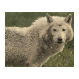Timber wolf wood wall art