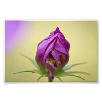 Time to Bloom Photo Print