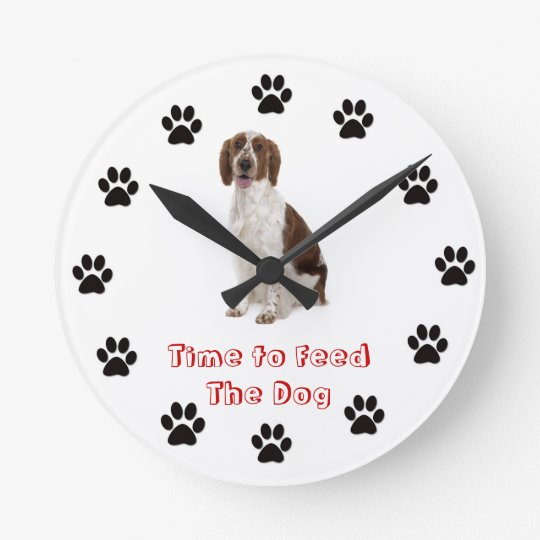 Time to feed the dog Welsh Springer Spaniel