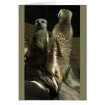 Time To Make Up! Meerkats Greeting Card