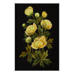 Timeless Globeflower Large Platinum Gloss Canvas P Posters