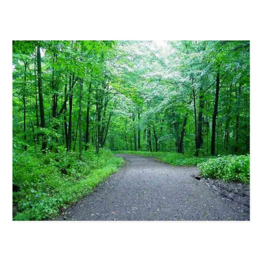 Timms Hill Park, Wisconsin Nature Postcard