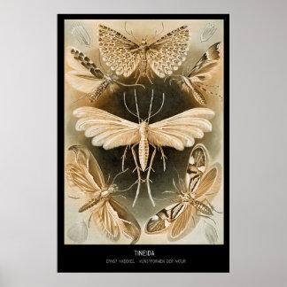 Tineida – Plate 58 - Kunstformen der Natur Poster