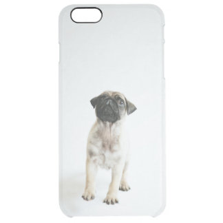 Tiny And Cute Pug Puppy Clear iPhone 6 Plus Case