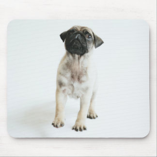 Tiny And Cute Pug Puppy Mouse Mat