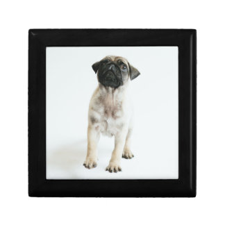 Tiny And Cute Pug Puppy Small Square Gift Box