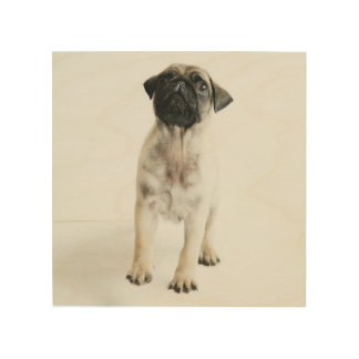 Tiny And Cute Pug Puppy Wood Wall Art
