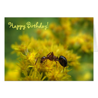 Tiny Ant on Goldenrod Birthday Card