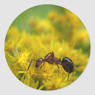 Tiny Ant on Goldenrod Classic Round Sticker