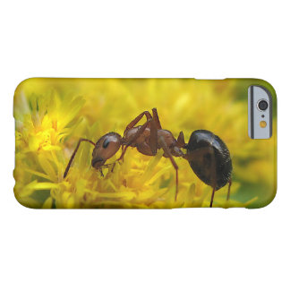 Tiny Ant on Goldenrod iPhone 6 Case Barely There iPhone 6 Case