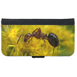 Tiny Ant on Goldenrod  iPhone 6 Wallet Case