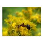 Tiny Ant on Goldenrod Postcard