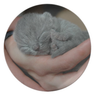 Tiny Baby Blue Kitten Party Plate