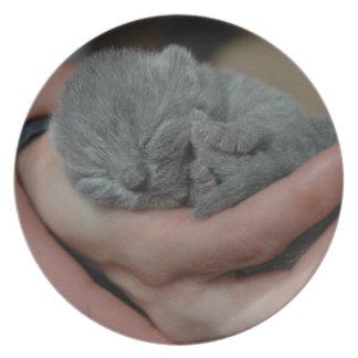 Tiny Baby Blue Kitten Plate