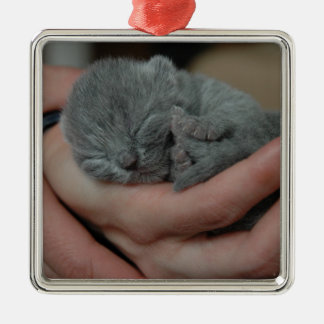 Tiny Baby Blue Kitten Silver-Colored Square Decoration