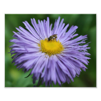 Tiny Bee On Purple Daisy Flower 10x8 Nature Photo Print