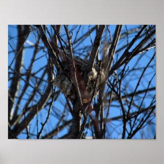 Tiny Bird Nest - Poster