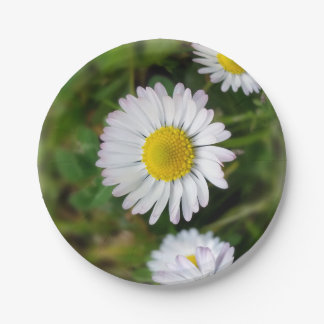 Tiny daisies 7 inch paper plate