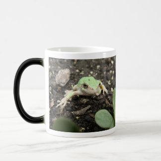 Tiny Frog Mug