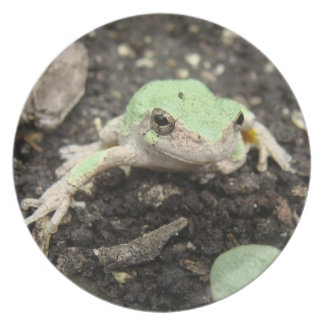 Tiny Frog Plate
