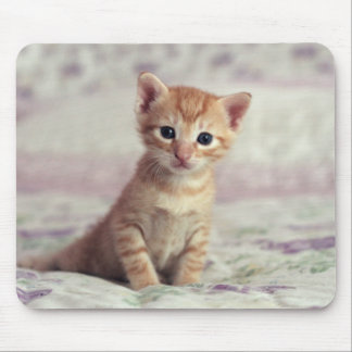 Tiny Ginger Kitten Mouse Pad