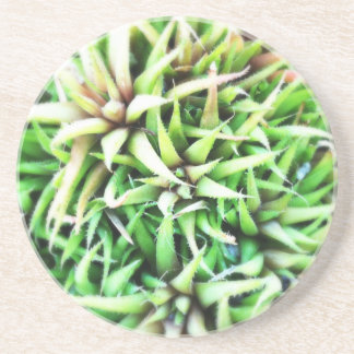 Tiny Green Aloe Coaster