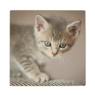 Tiny Kitten Wood Coaster