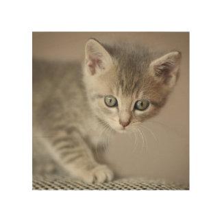 Tiny Kitten Wood Wall Art