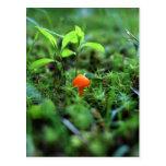 Tiny Orange Mushroom Postcards
