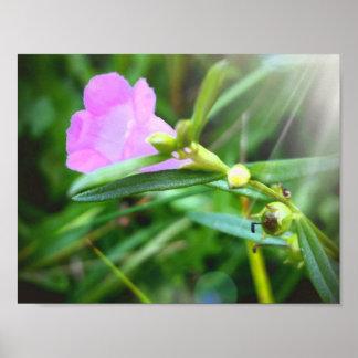 "Tiny Purple Bloom 11"" x 8.5"", Poster (Matte)"