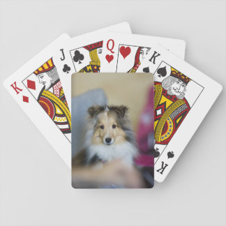 Tiny Sable Merle Sheltie Playing Cards