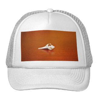 Tiny Shell Cap