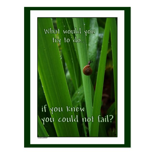 "Tiny Snail ""If you could not fail"" Postcard"