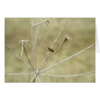 Tiny Spider on Queen Anne's Lace Stalk Note Card