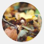 Tiny toadstool sticker