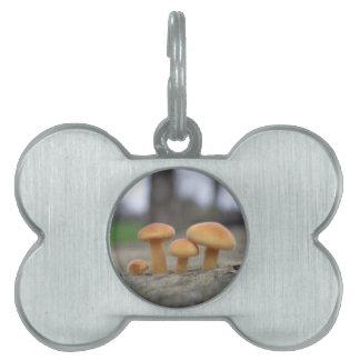Tiny Toadstools Macro Pet Tag
