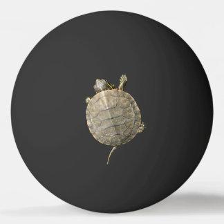 Tiny Turtle on Black
