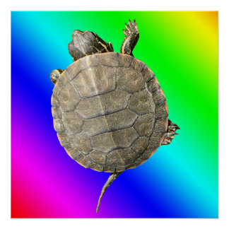 Tiny Turtle (Tortoise) on Rainbow Colors Gradient