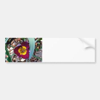 Tiny Two Tone Tulip Bumper Sticker