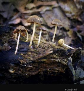 Purple Mushroom Art Painting Print Posters Prints Zazzle Uk